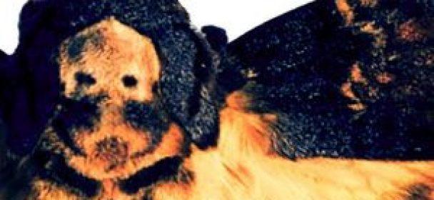 "LONELY KAMEL neues Album """"Hawkmoth"" am 23.3."